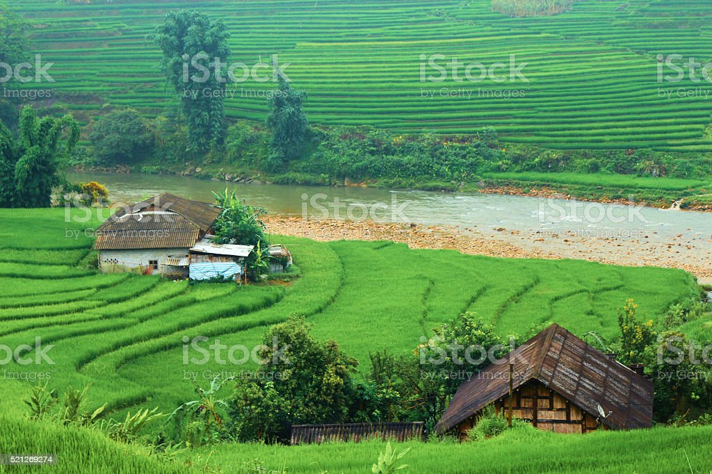 rice fields at Sapa Viet Nam stock photo