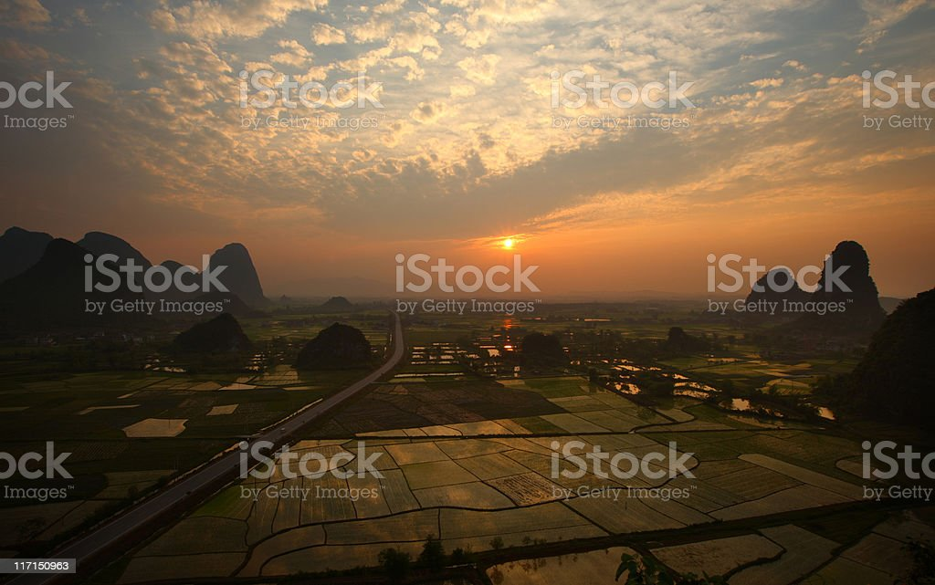 rice fields at sunset royalty-free stock photo