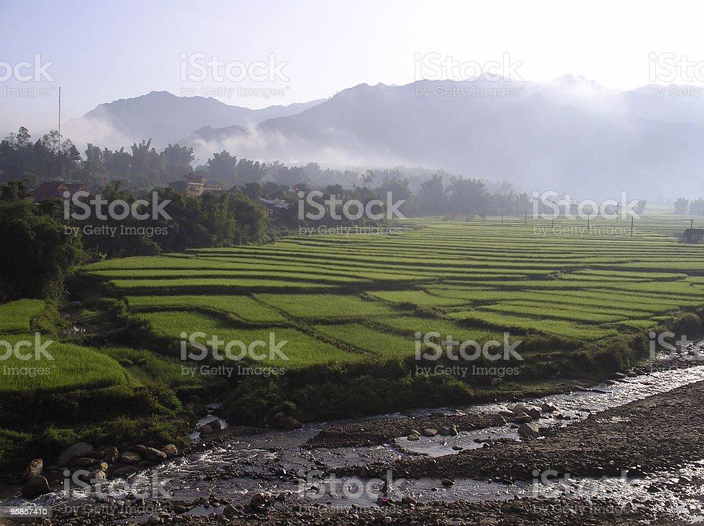 Rice fields in morning mist stock photo