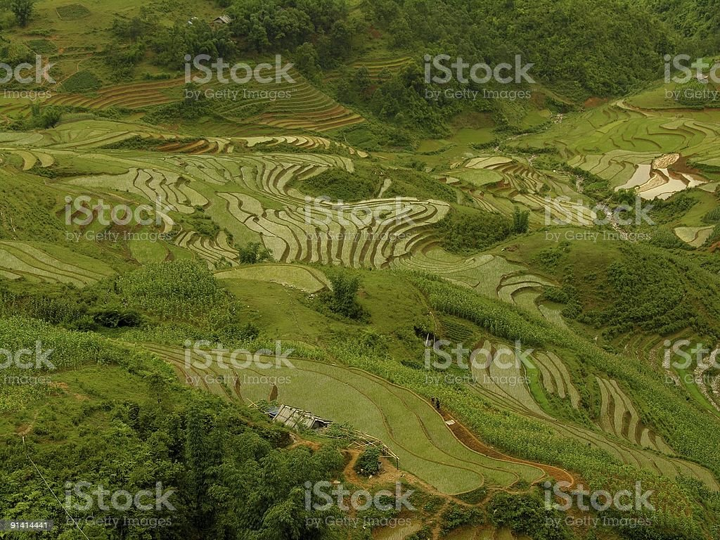 Rice fields (pads) in Sapa, Vietnam royalty-free stock photo