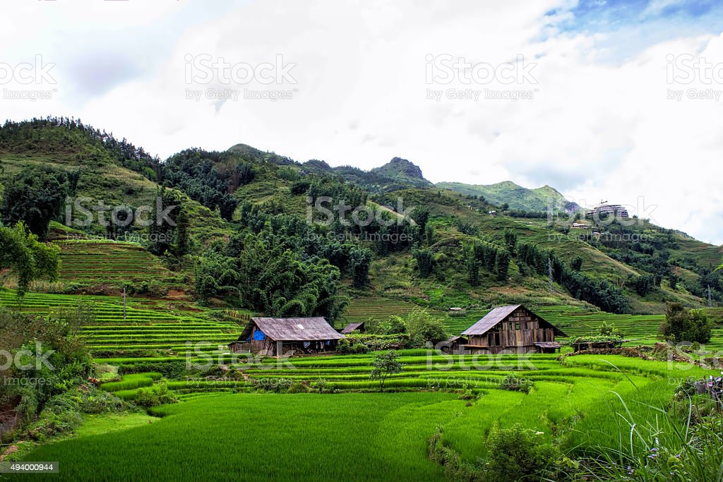 Rice fields in Sapa village, Vietnam stock photo