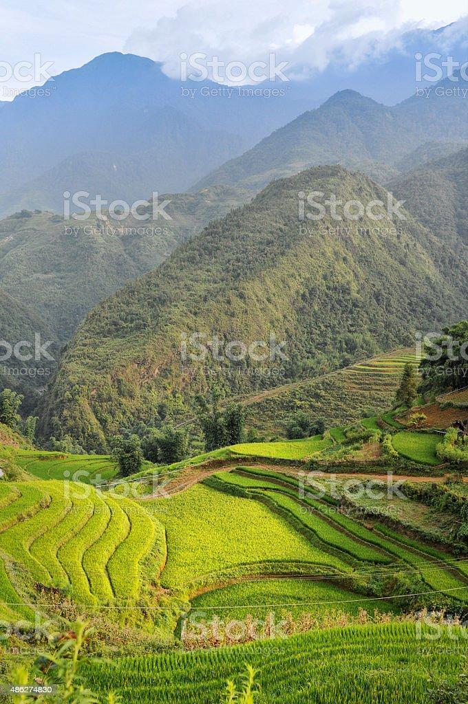 Rice Fields in Vietnam near Sa Pa stock photo