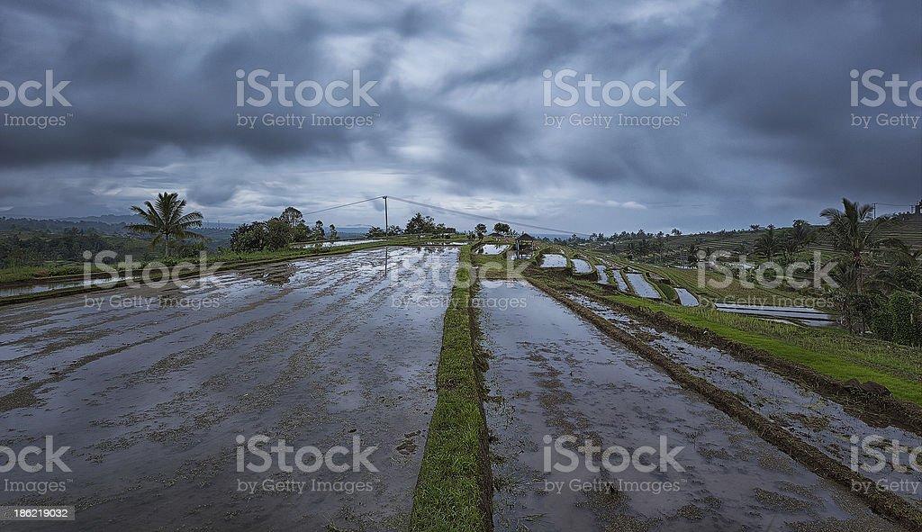 Rice Fields - Jatiluwih, Bali stock photo