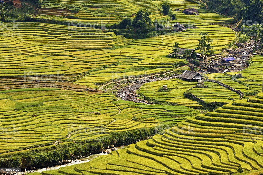 Rice fields near Sapa town in North Vietnam stock photo