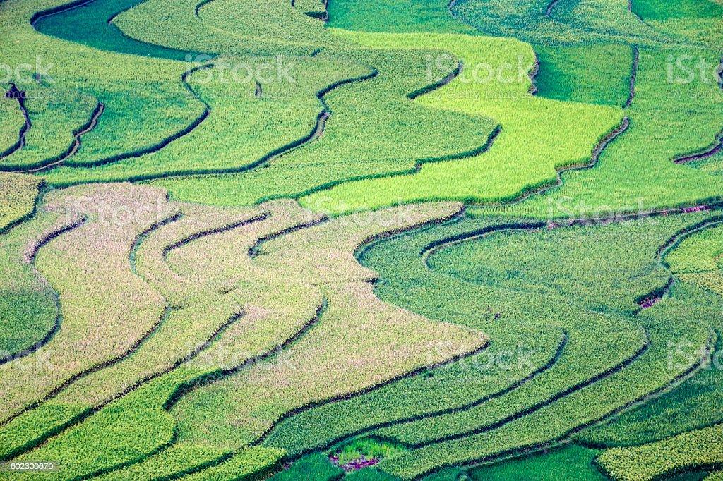 Rice fields on terrace in Tu Le, Mu Cang Chai stock photo