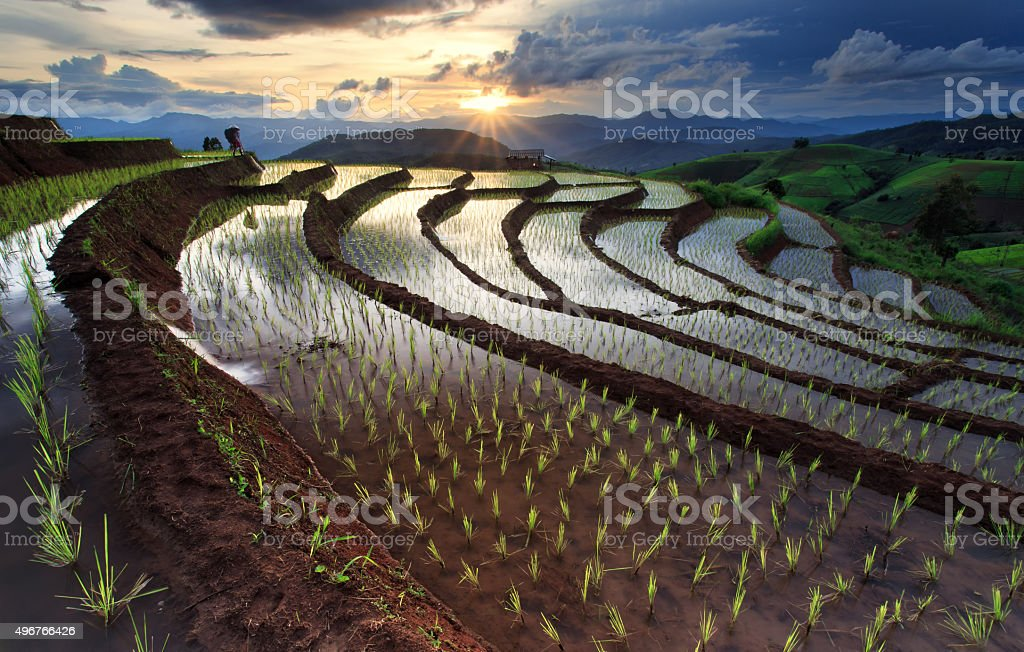 Rice fields on terraced at Chiang Mai, Thailand stock photo
