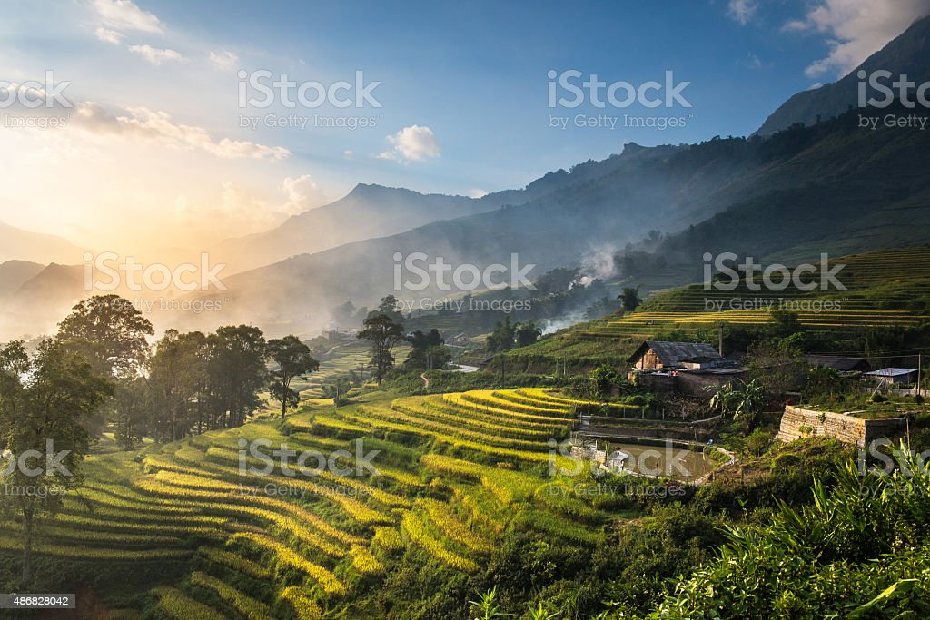 Rice fields on terraced in sunset at SAPA. stock photo