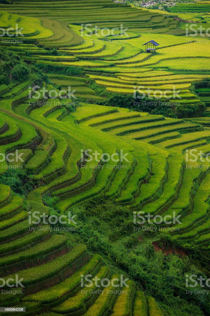 Rice fields on terraced in sunset at Tu Le Village, stock photo