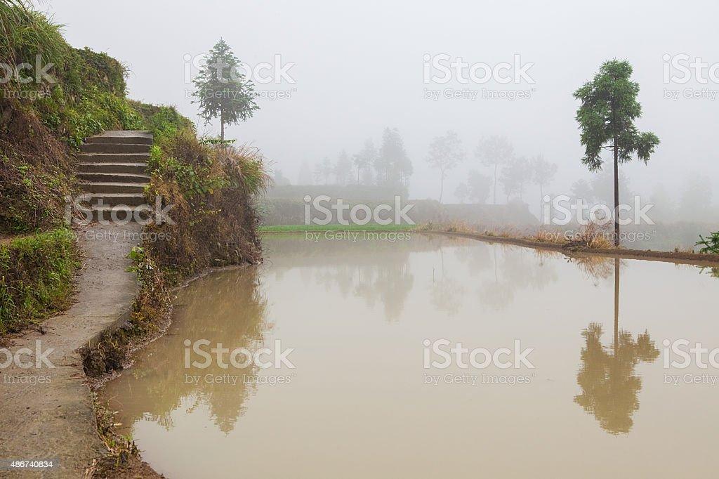 Rice fields on terraced in surice stock photo
