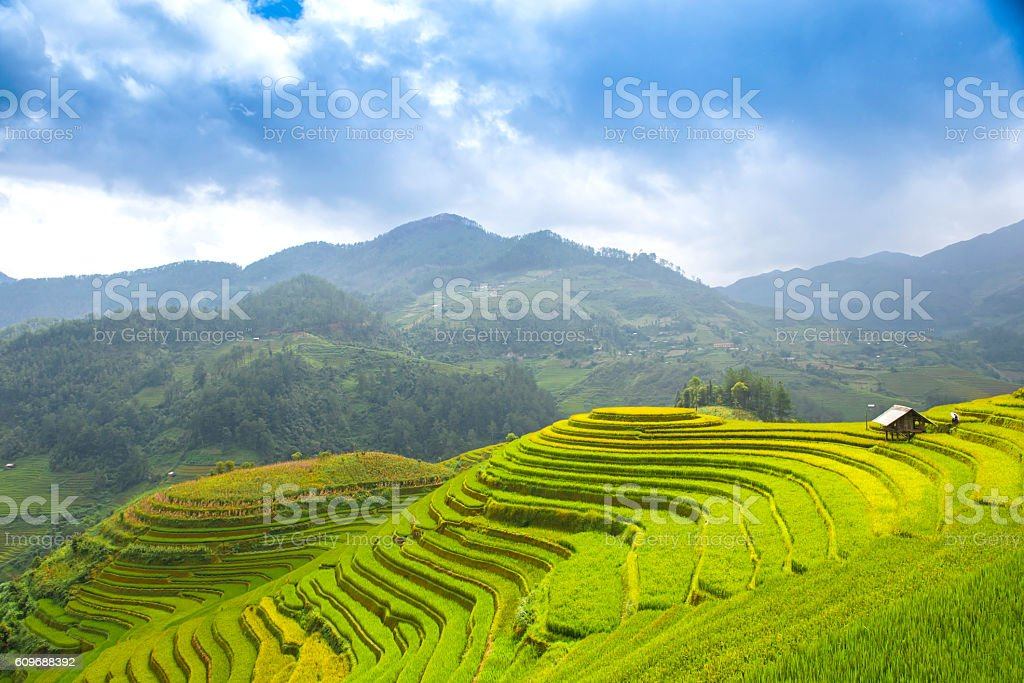 Rice fields on terraced of Mu Cang Chai, YenBai, Vietnam stock photo
