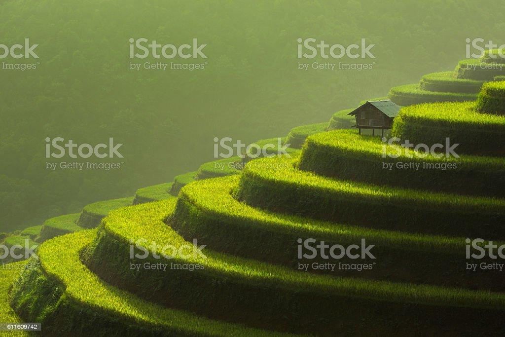 Rice fields on terraced of Mu Cang Chai, YenBai, Vietnam stock photo