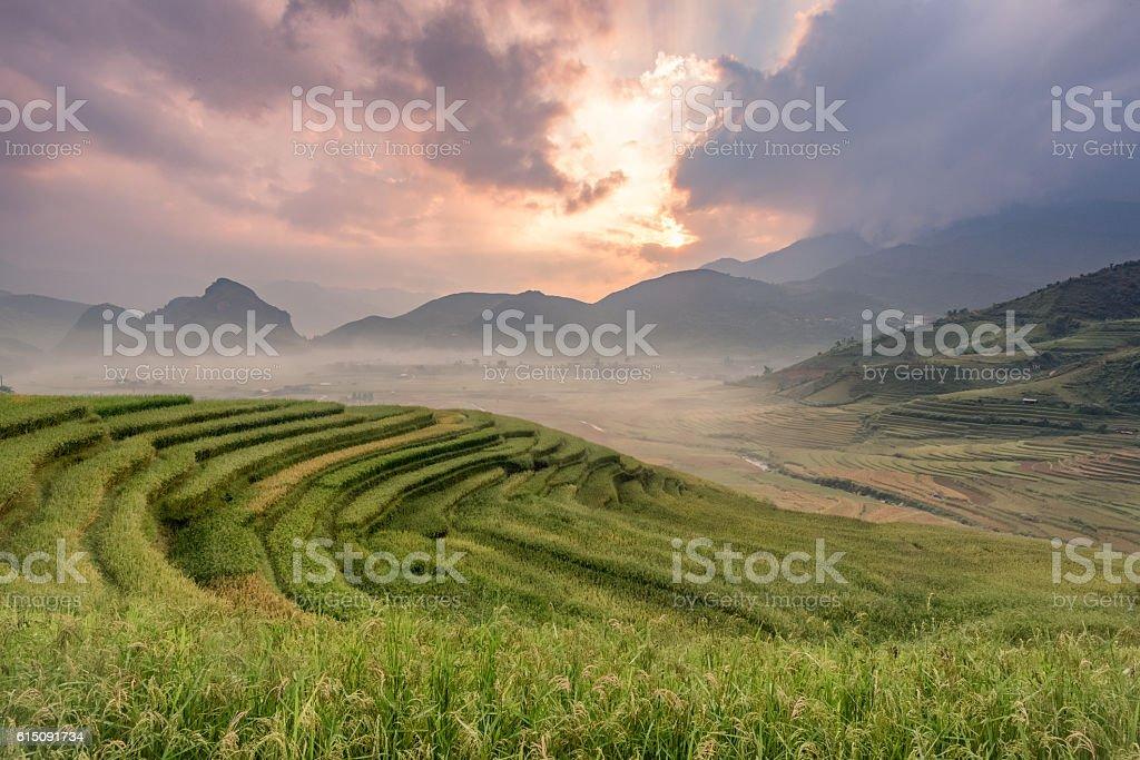 Rice fields on terraced of Mu cang chai,YenBai stock photo