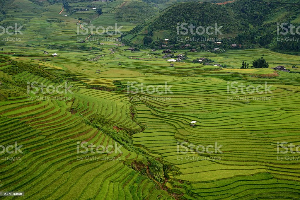 Rice fields on terraced stock photo