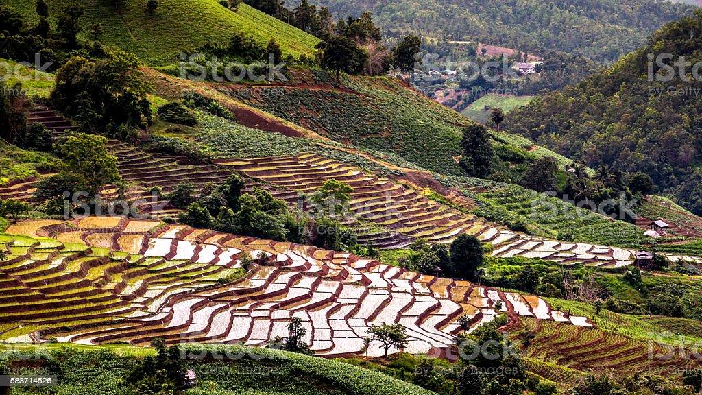 Rice fields on terraced. stock photo