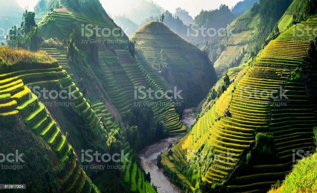 Rice fields on terraces in the sun at MuCangChai, Vietnam. stock photo