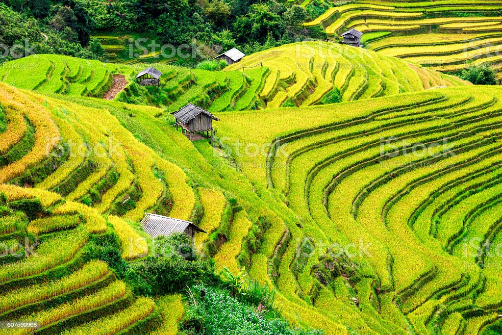 Rice fields terraced and small Village in vietnam stock photo