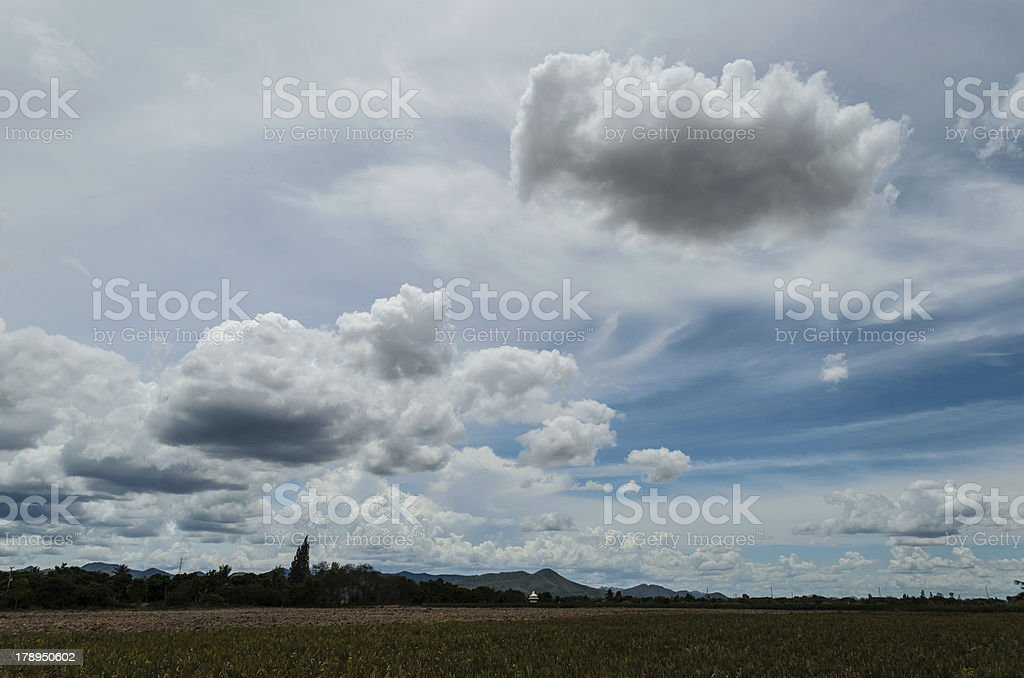 Rice fields with Blue sky royalty-free stock photo