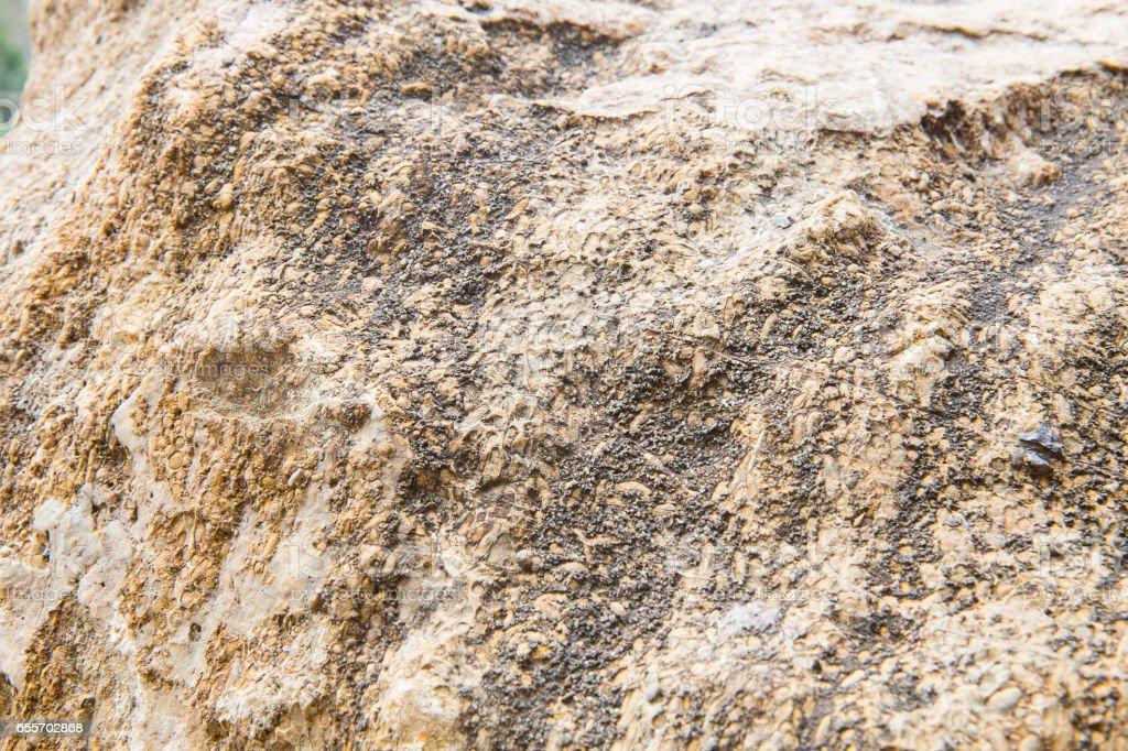 Rice Fossil, Grain petrified. stock photo