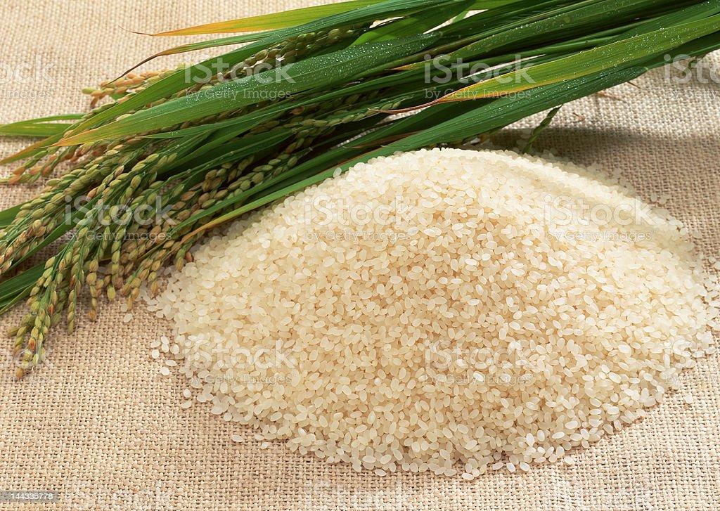 Rice Grain stock photo