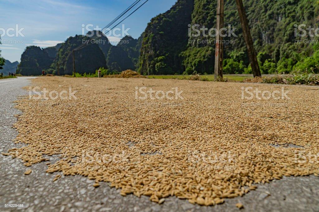rice grains in closeup stock photo
