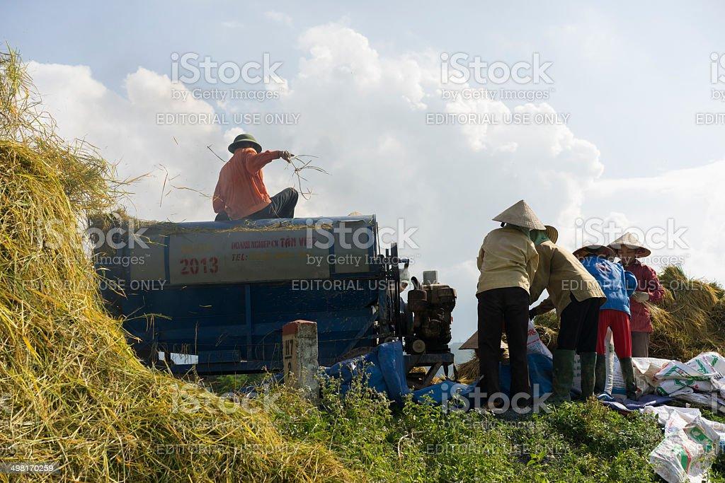 Rice havest stock photo