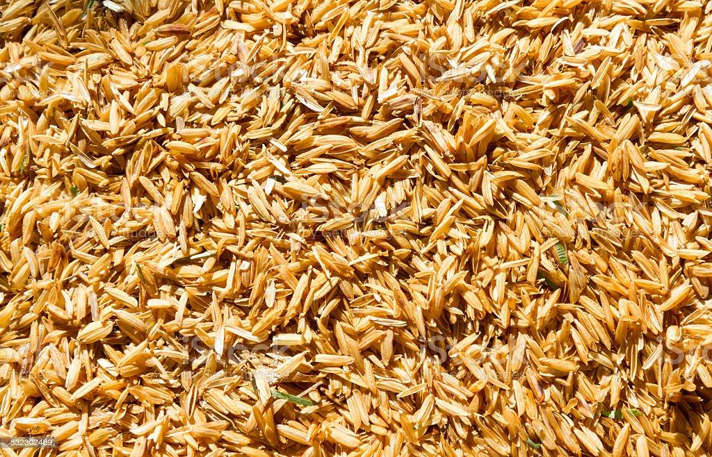 Rice husk on the floor. stock photo