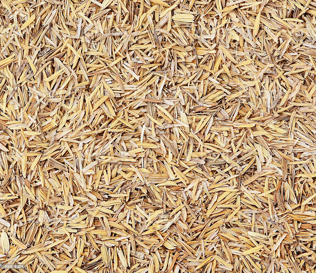 Rice husk texture,Thailand stock photo