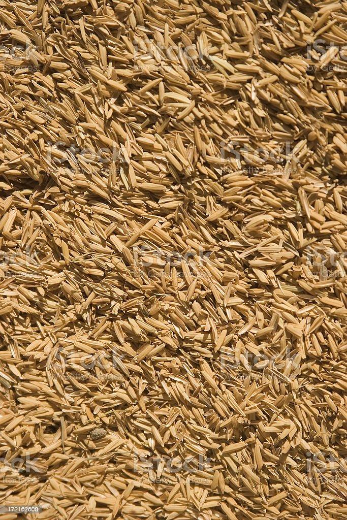 Rice husks stock photo