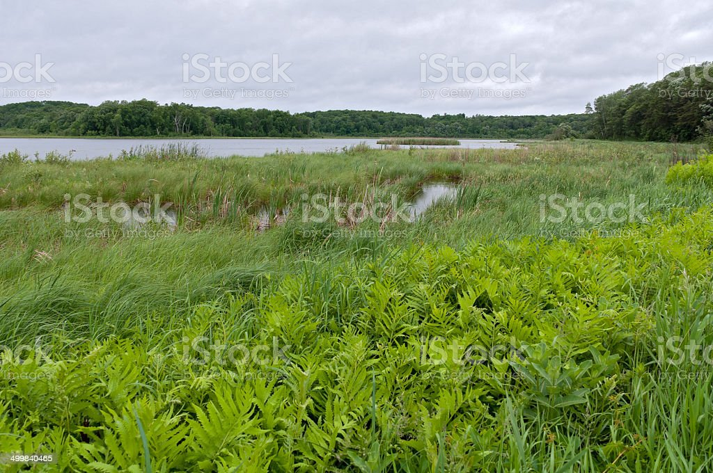 Rice Lake and Marshes at Breezy Point stock photo
