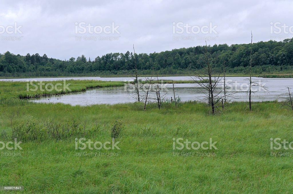 Rice Lake Landscape at Breezy Point stock photo