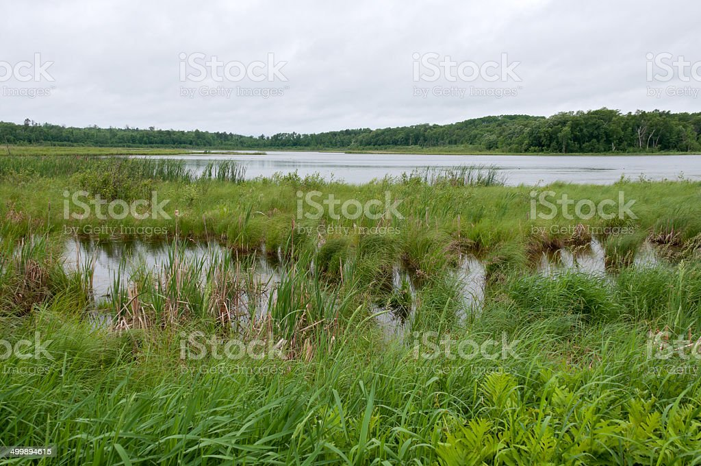 Rice Lake Marshes and Woods at Breezy Point stock photo