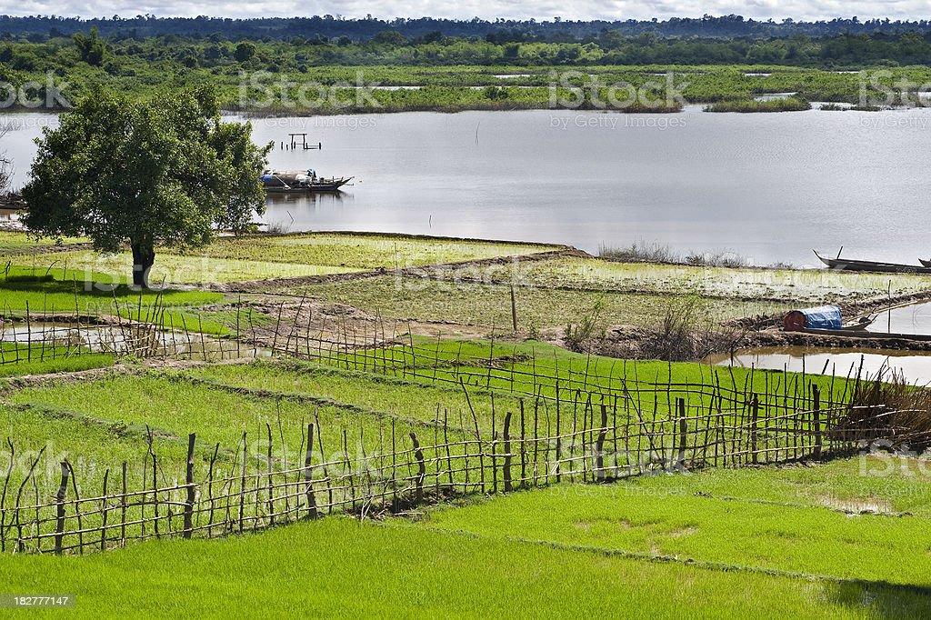 Rice paddies and fishing boats at Mekong River, Cambodia stock photo
