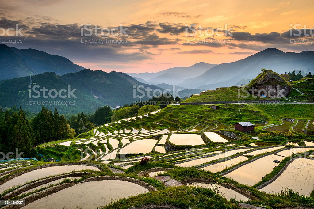 Rice Paddies in Japan stock photo