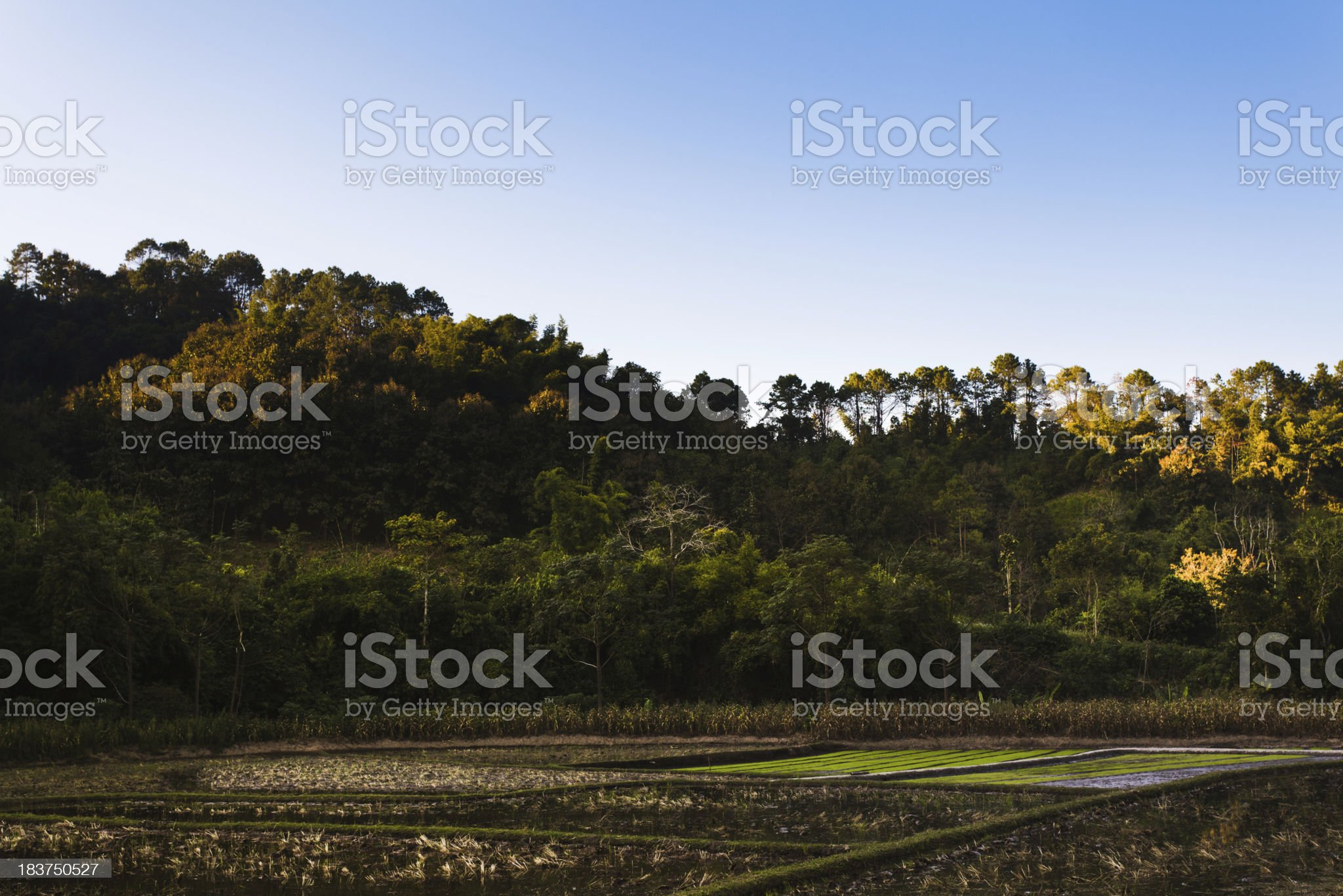 Rice Paddies in the North of Thailand royalty-free stock photo