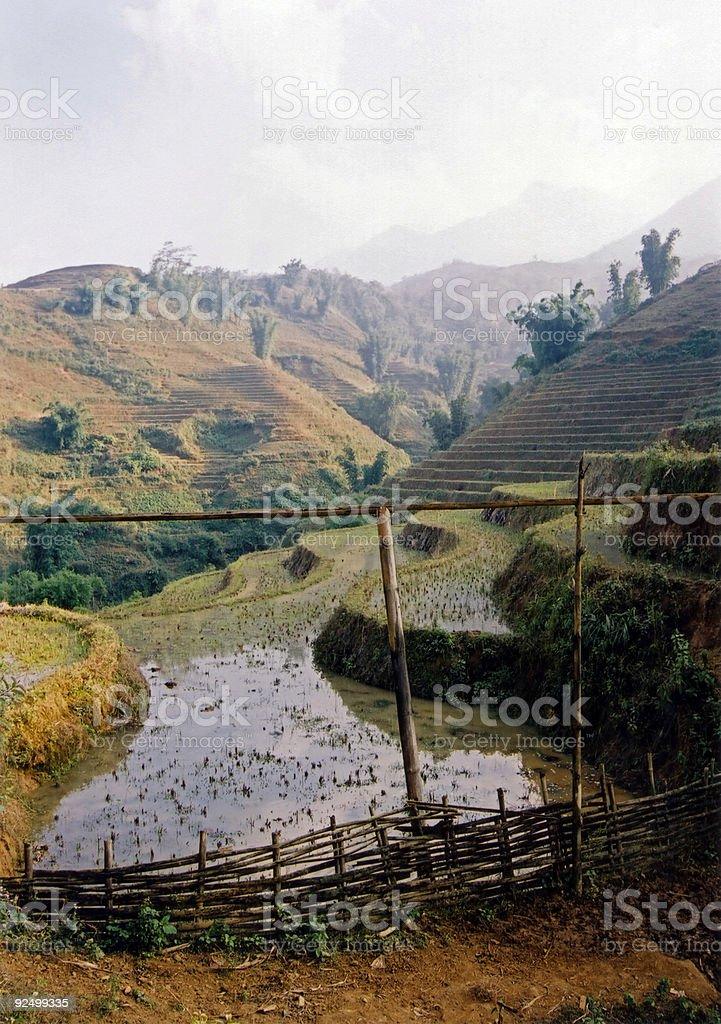 rice paddies royalty-free stock photo