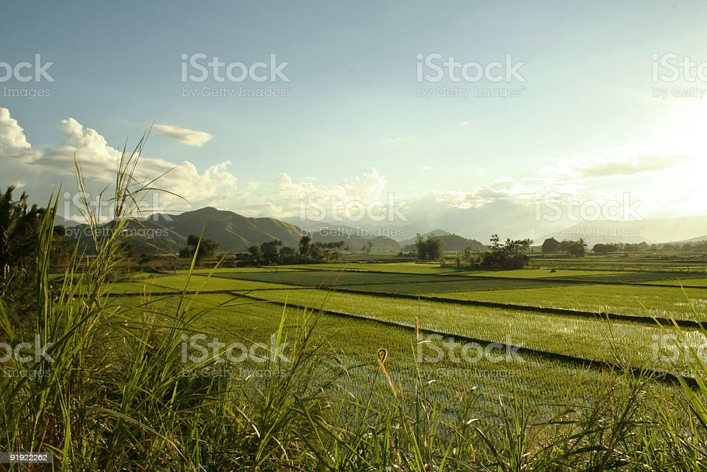 rice paddies rural landscape philippines royalty-free stock photo