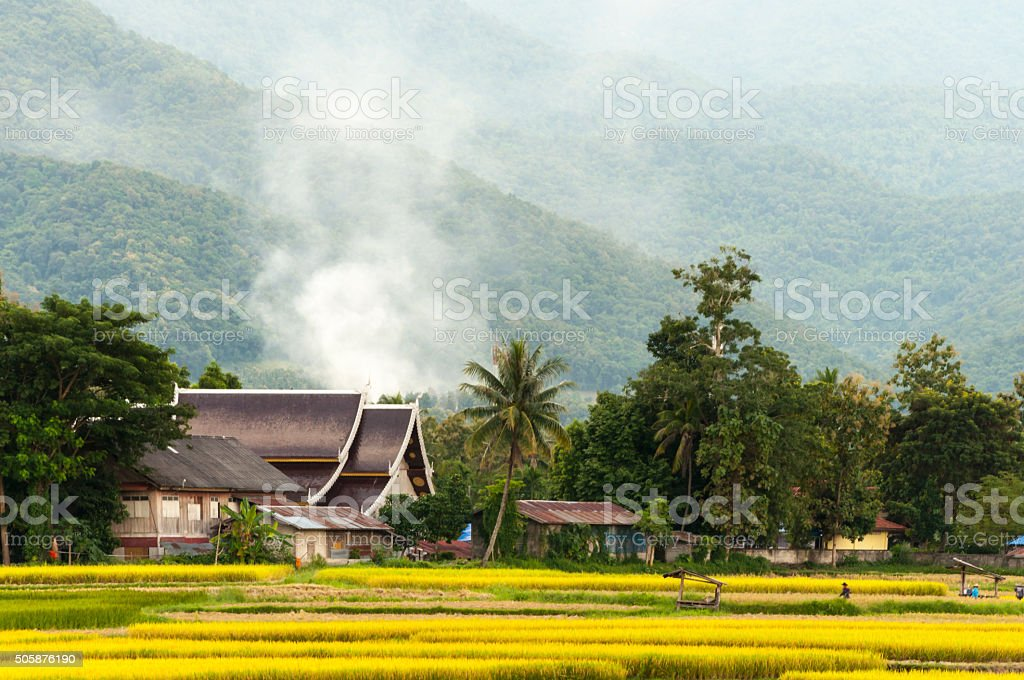 Rice paddy and Thai style house ,Nan,Thailand. stock photo