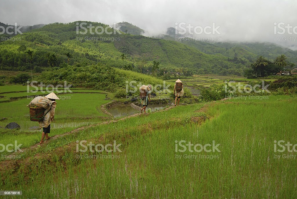 Rice paddy and workers in Vietnam stock photo