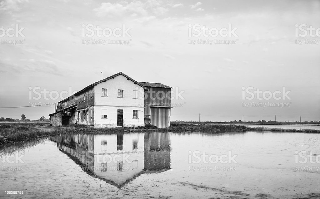 Rice Paddy. Black and White stock photo