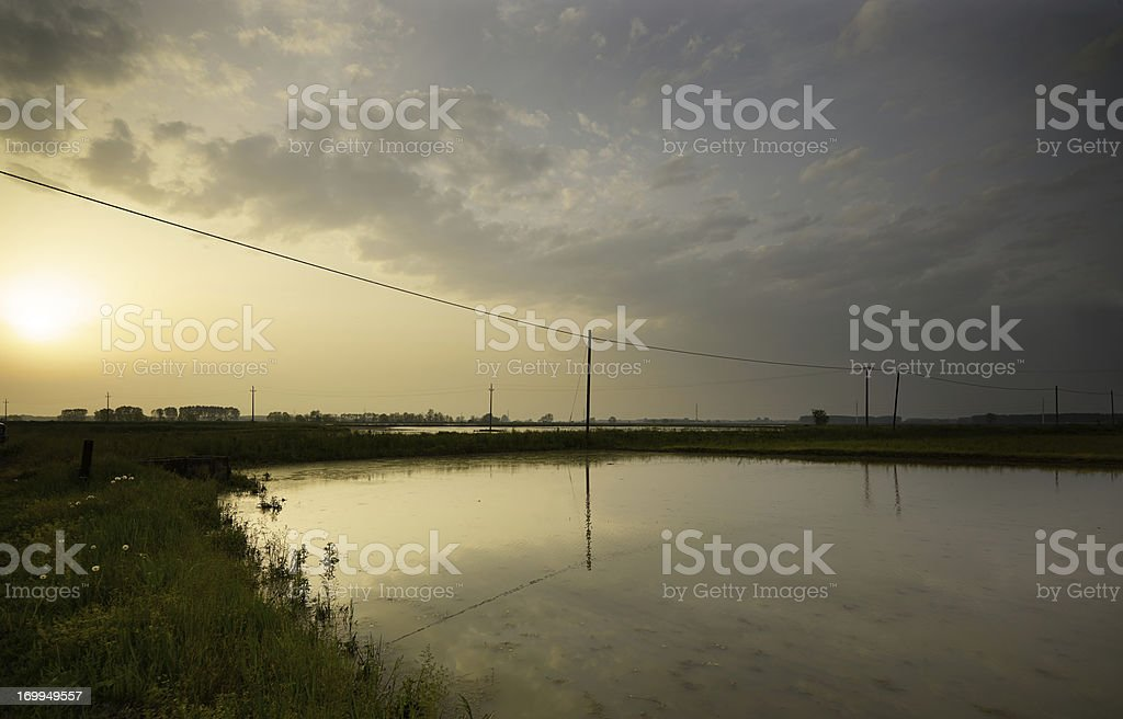 Rice Paddy. Color Image stock photo