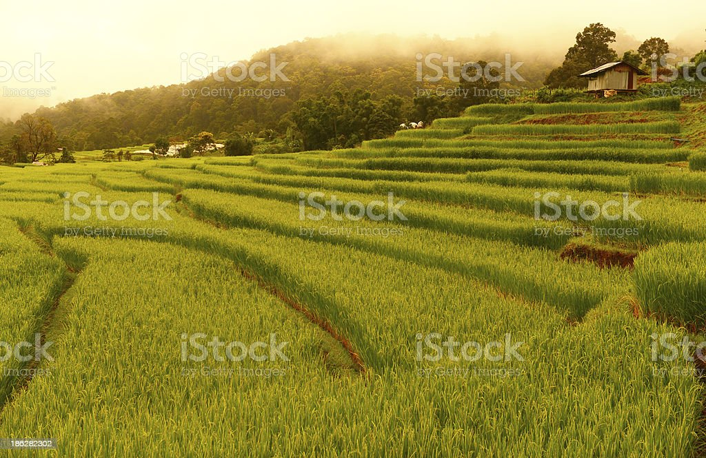 Rice Paddy Fields on Terraced Hills royalty-free stock photo