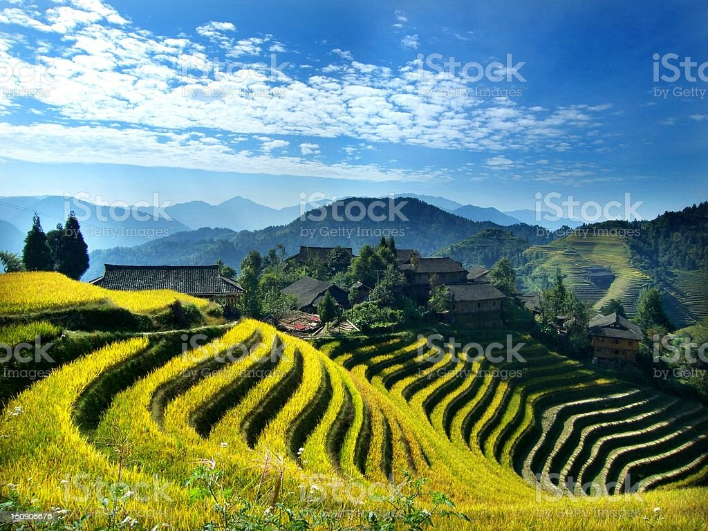 Rice paddy in Longsheng stock photo