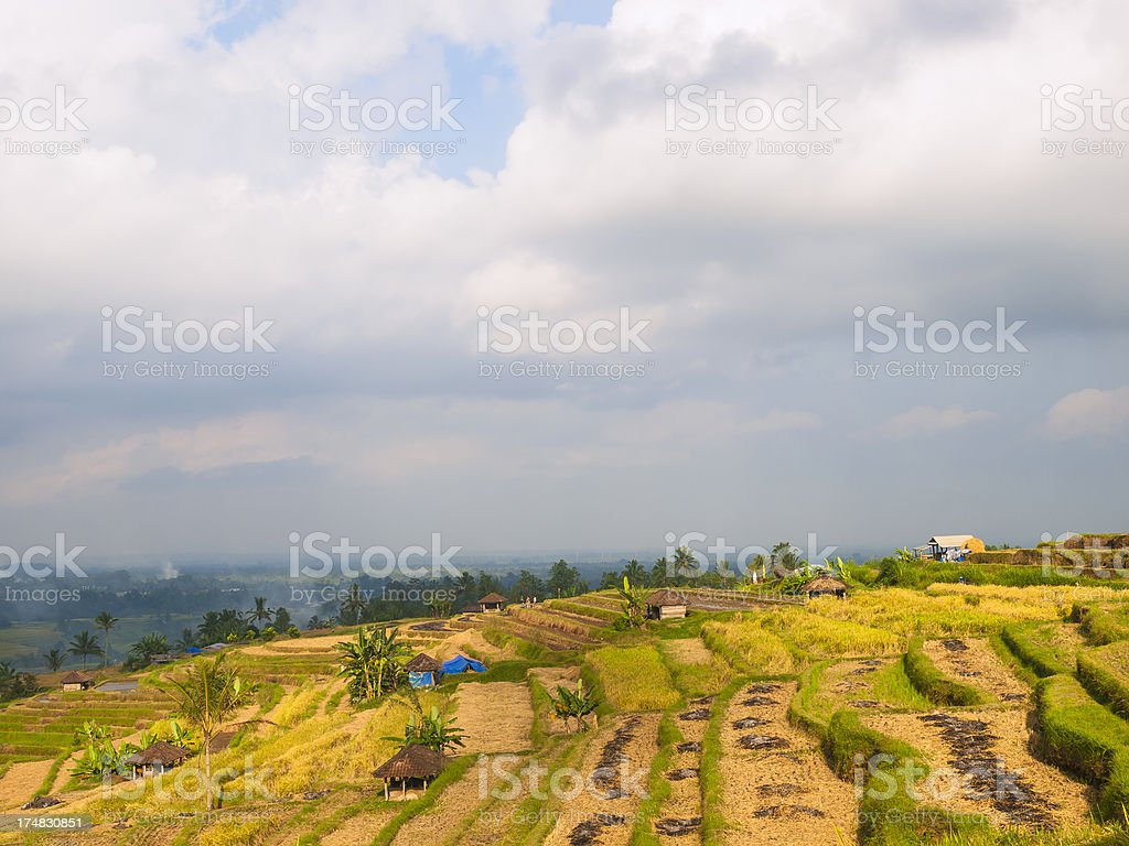 rice paddy royalty-free stock photo