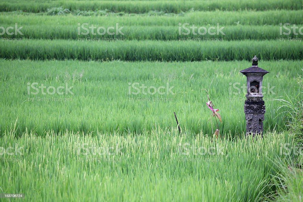 Rice Paddy Shrine stock photo