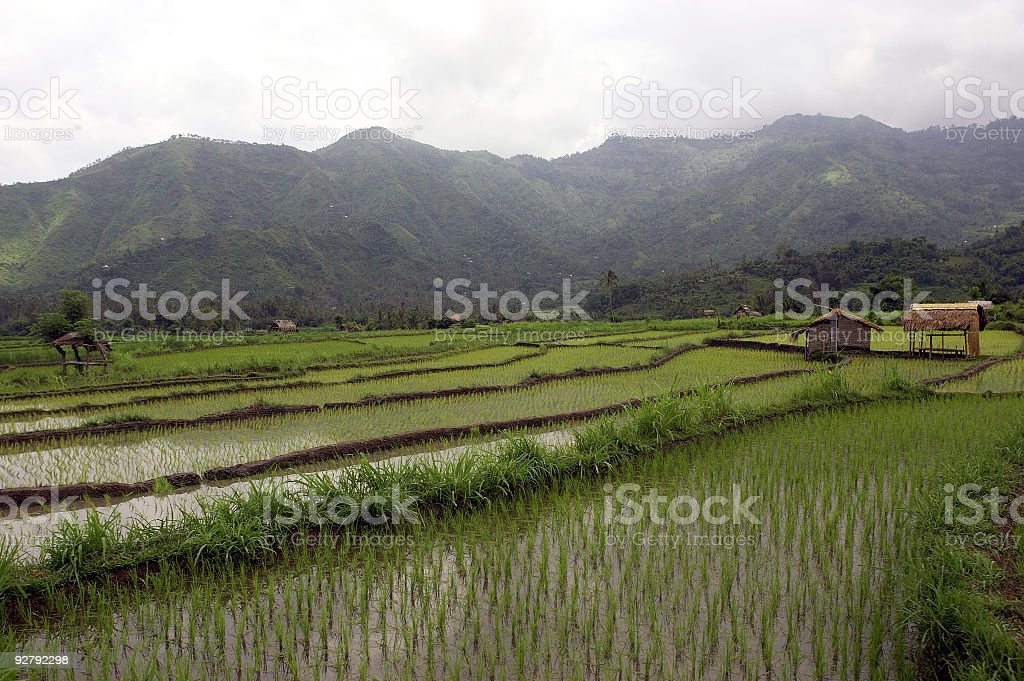 Rice Paddy Terraces in Bali Indonesia Series royalty-free stock photo