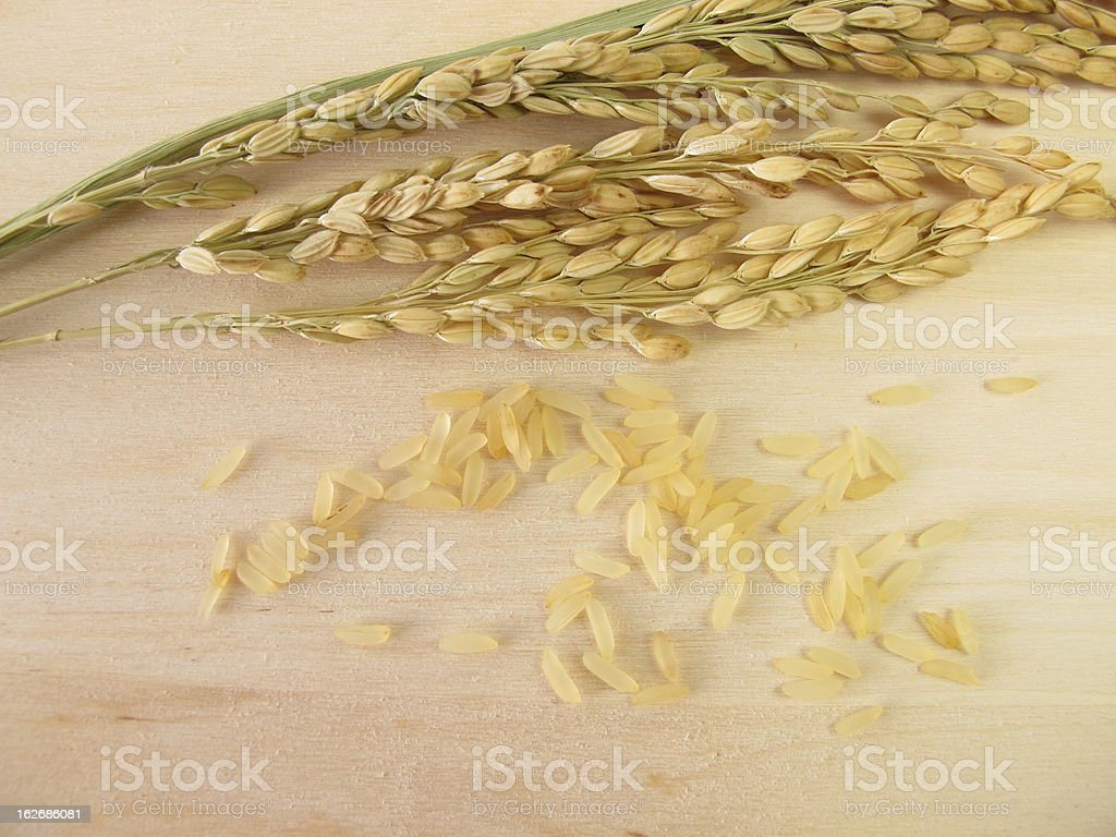 Rice panicles royalty-free stock photo