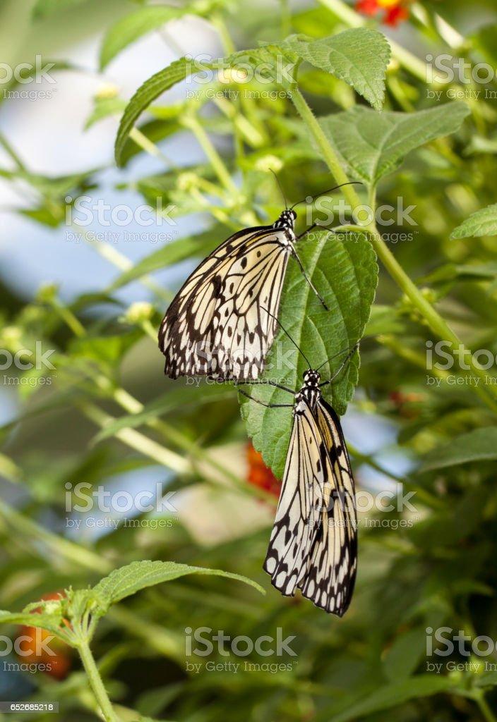 Rice paper butterflies stock photo