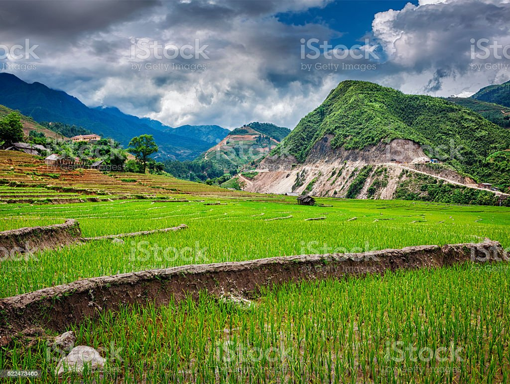 Rice plantations. Vietnam stock photo