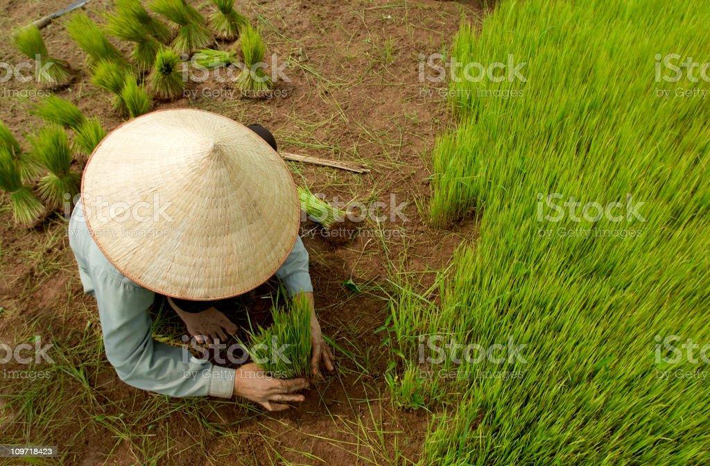 Rice Planter royalty-free stock photo