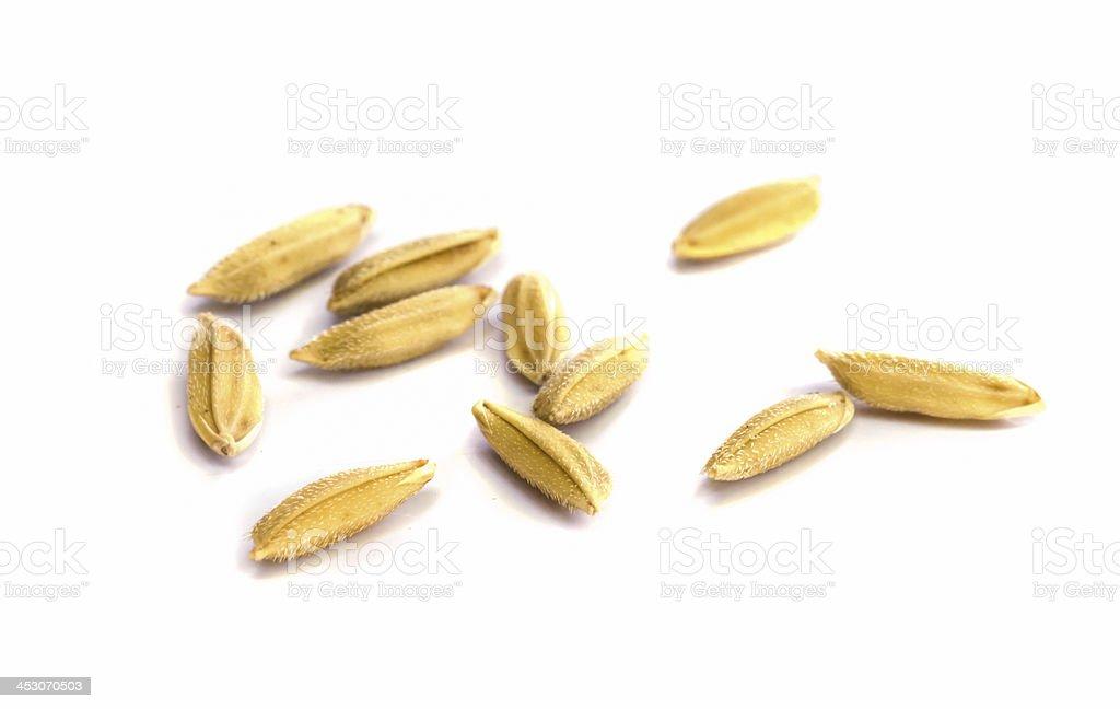 rice seed. stock photo